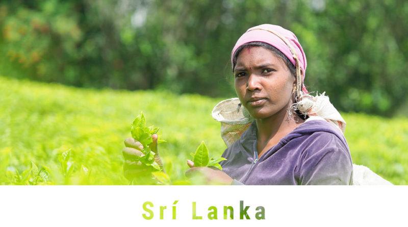 Fotoexpedice Srí Lanka