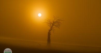 Fotoexpedice Moravské Toskánsko osamělá třešeň